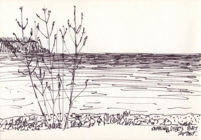 Saplings at Dyer's Bay