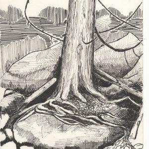 Tree on the Rocks